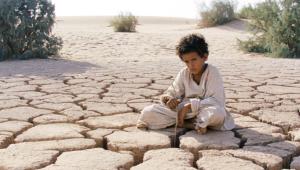 lobo-do-deserto